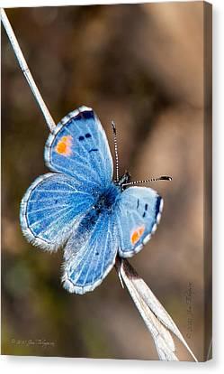 Sonoran Blue Canvas Print by Jim Thompson