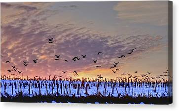 Southbound Canvas Print by Steve Ratliff