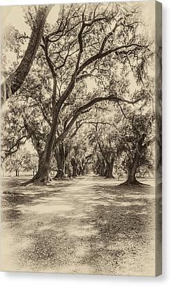Evergreen Plantation Canvas Print - Southern Lane Sepia by Steve Harrington