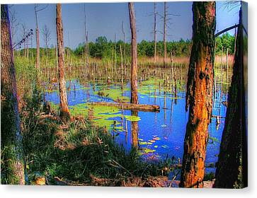 Southern Swamp Canvas Print by Ed Roberts