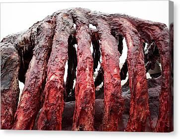 Carcass Canvas Print - Sperm Whale Carcass by Thomas Fredberg