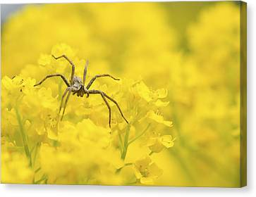 Spider Canvas Print by Jaroslaw Grudzinski