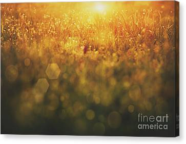 Npetolas Canvas Print - Spring Background by Mythja  Photography