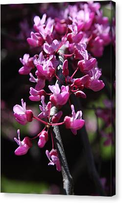 Canvas Print featuring the photograph Spring Colors by Vadim Levin