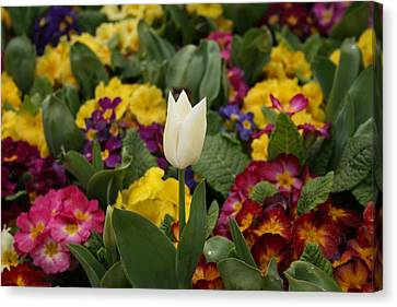 Spring Colour Canvas Print by Maeve O Connell