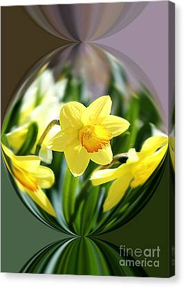 Spring Daffodils   Canvas Print by Tina  LeCour