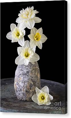 Spring Daffodils Canvas Print by Edward Fielding