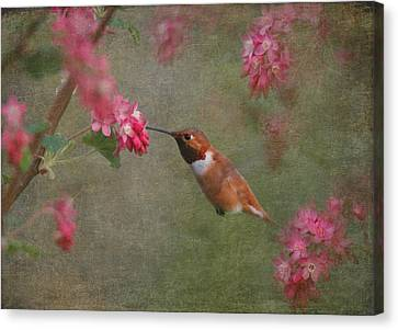 Male Hummingbird Canvas Print - Spring Delight by Angie Vogel