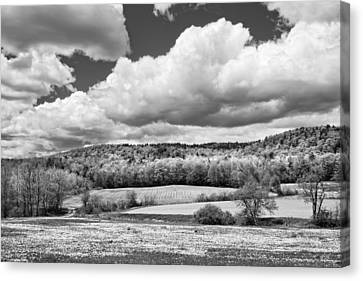 Spring Farm Landscape With Dandelions In Maine Canvas Print by Keith Webber Jr