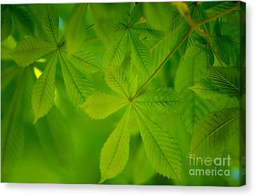 Spring Green Canvas Print