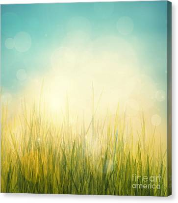 Spring Or Summer Abstract Season Nature Background  Canvas Print by Mythja  Photography