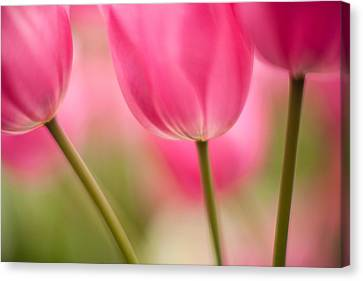 Spring Trio Canvas Print by Mike Reid