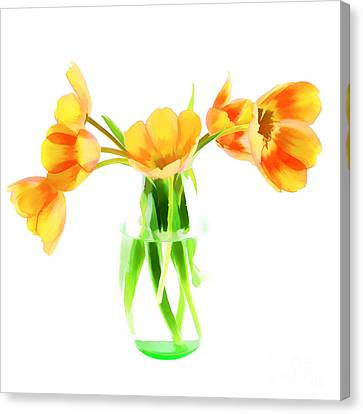 Spring Tulips Canvas Print by Darren Fisher