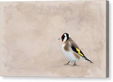 Stieglitz Canvas Print