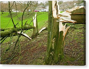 Storm Damage Canvas Print by Ashley Cooper