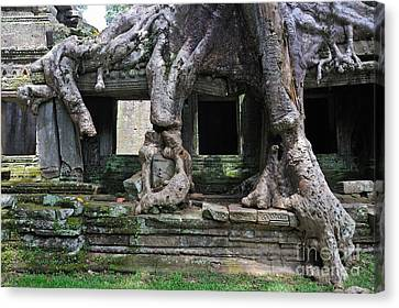 Strangler Fig Tree Roots On Preah Khan Temple Canvas Print by Sami Sarkis