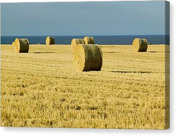 Straw Bales In A Field Canvas Print
