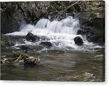 Canvas Print featuring the photograph Streambed by David Lester