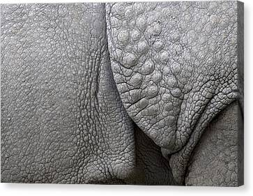 Structure Of The Skin Of An Indian Rhinoceros In A Zoo In The Netherlands Canvas Print by Ronald Jansen