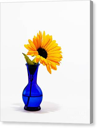 Canvas Print featuring the photograph Study In Blue by Cecil Fuselier