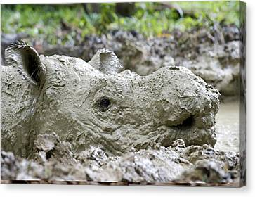 Sumatran Rhinoceros Canvas Print