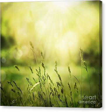 Npetolas Canvas Print - Summer Background by Mythja  Photography
