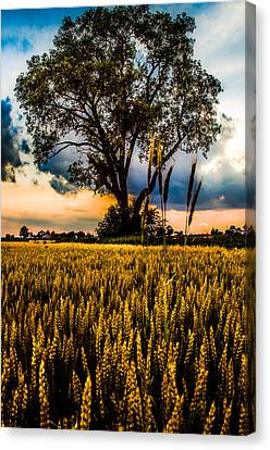 Summer Evening After A Rain Canvas Print by Michael Arend
