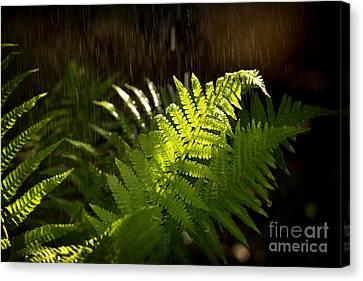 Summer Rain Canvas Print by Jane Rix