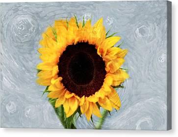 Sunflower Canvas Print by Bill Howard