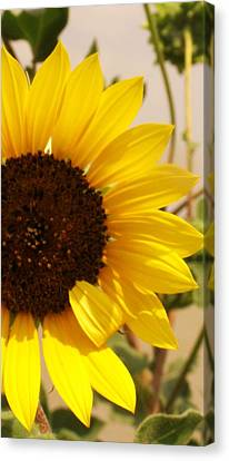Canvas Print featuring the photograph Sunflower by Diane Miller