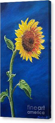 Sunflower In The Light Canvas Print