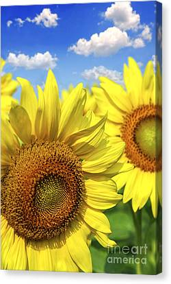 Two Suns Canvas Print - Sunflowers by Elena Elisseeva