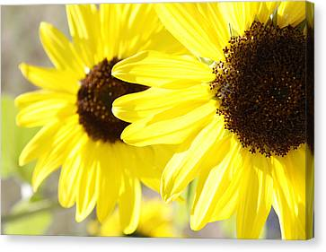 Sunflowers  Canvas Print by Les Cunliffe