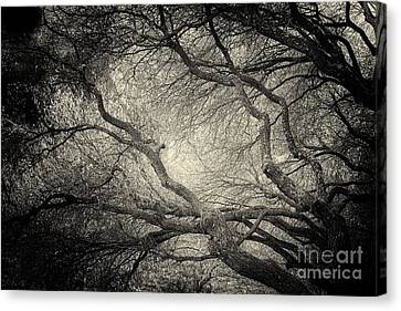Sunlight Through Branches Of A Tree Canvas Print by Nicola Fiscarelli