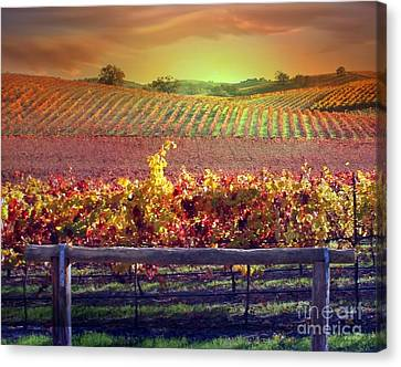 Sunrise Vineyard Canvas Print by Stephanie Laird