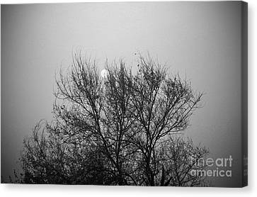 Canvas Print featuring the photograph Sunset In Black And White by Mohamed Elkhamisy