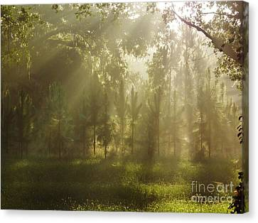 Sunshine Morning Canvas Print by D Hackett