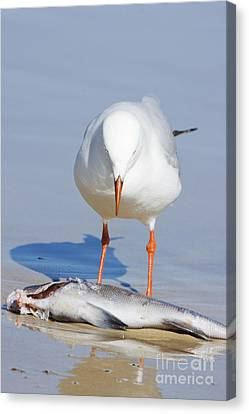 Survive Canvas Print - Surprised Seagull by Jorgo Photography - Wall Art Gallery