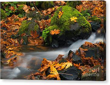 Surrounded By The Season  Canvas Print by Mike Dawson