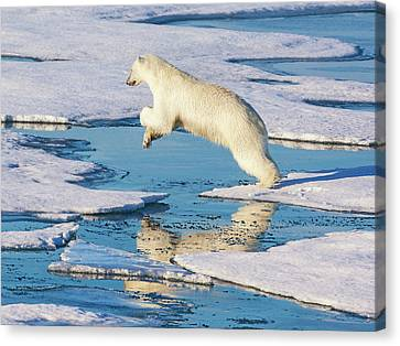 Courage Canvas Print - Svalbard, Norway by Janet Muir