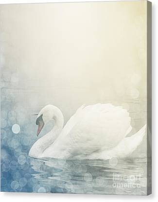 Swan Canvas Print by Jelena Jovanovic