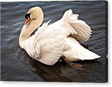 Canvas Print featuring the photograph Swan One by Elf Evans