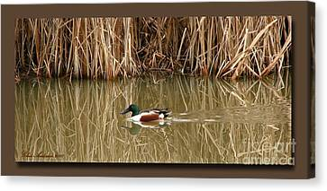 Swimming Among The Reeds Canvas Print by Chris Anderson