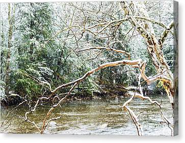Sycamore Snow And Williams River  Canvas Print by Thomas R Fletcher