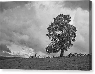 Table Mountain Oak Tree Canvas Print