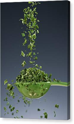 Cook Canvas Print - 1 Tablespoon Chives by Steve Gadomski