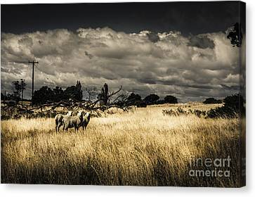 Tasmania Landscape Of An Outback Cattle Station Canvas Print