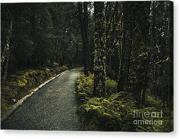Tasmanian Road Landscape In Dense Country Forest Canvas Print by Jorgo Photography - Wall Art Gallery