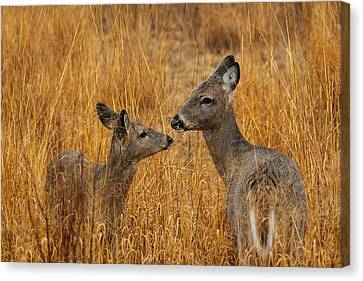 Tender Moment  Canvas Print by James Marvin Phelps