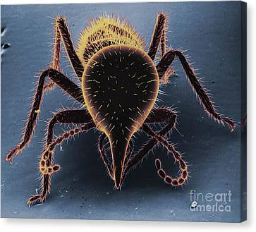 Termite Soldier Canvas Print by David M. Phillips